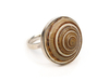 Shell silver ring